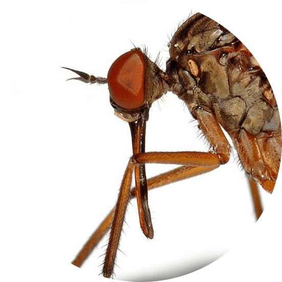 paludisme guide complet