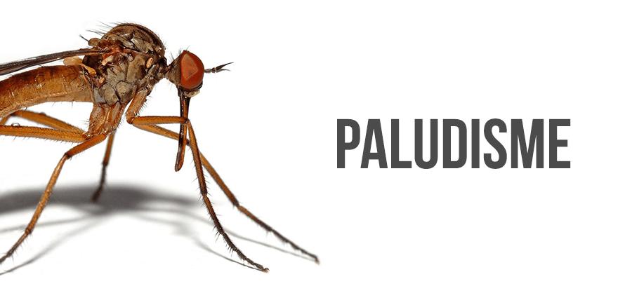 traitement paludisme symptomes sans ordonnance