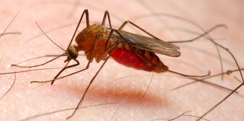 maladie parasitaire le paludisme