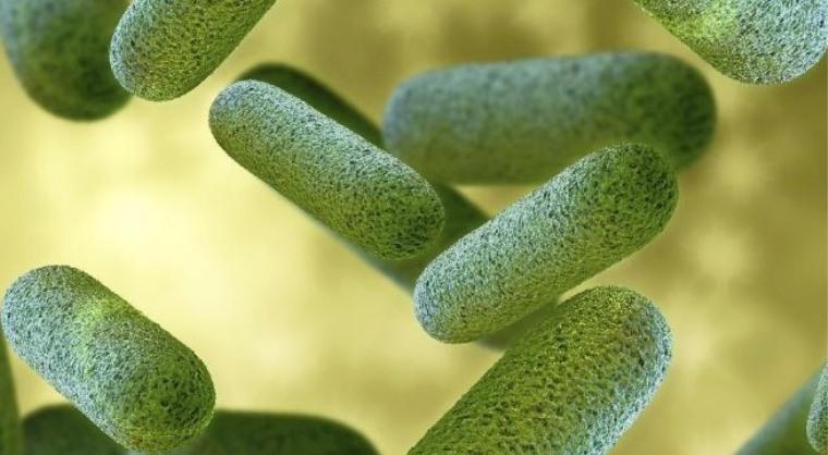 Bactérie responsable de la gonorrhée
